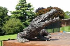 Friendly deck crocodile